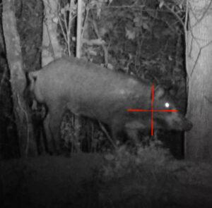 Hog Hunting in SE Oklahoma