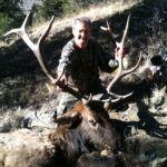 Bull Elk Amalia New Mexico