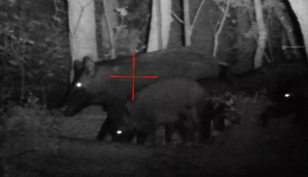 Wild Boar Hunting Videos near Ashland OK