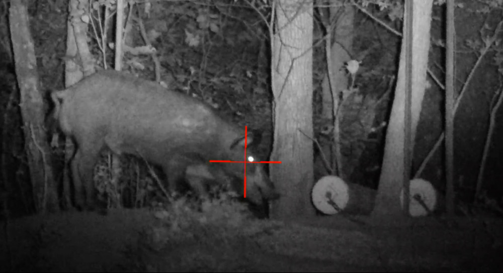 Wild Boar Hunting Videos