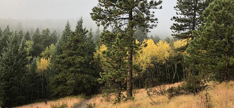 Elk Meadow Trail Evergreen, CO
