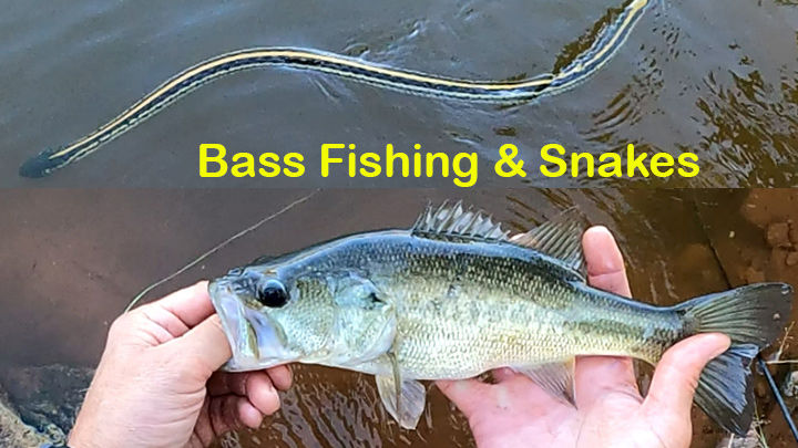 Bass Fishing and Snakes