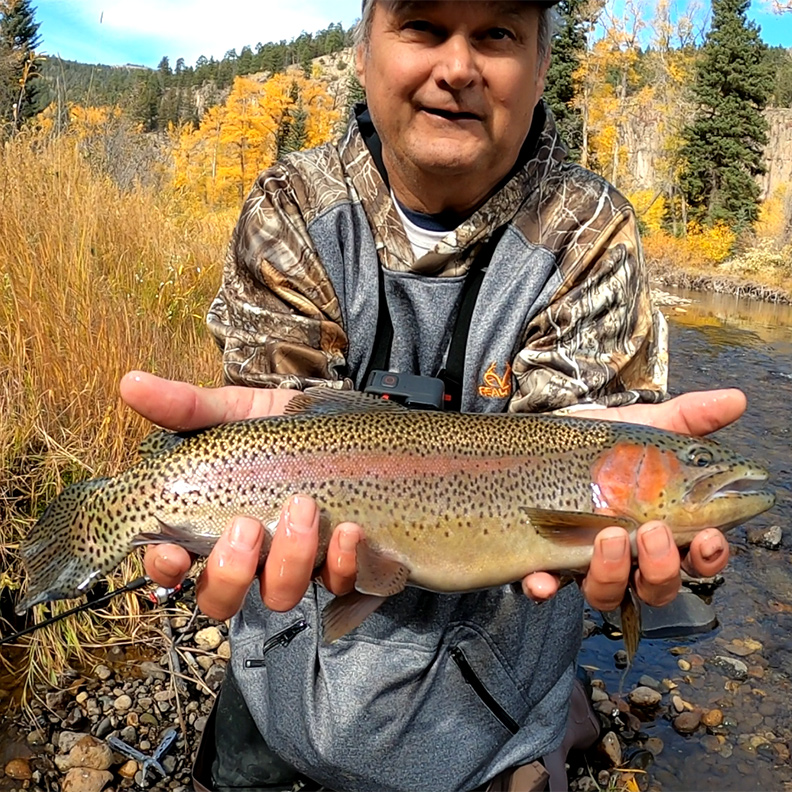 Rainbow Trout   South Fork Rio Grand River