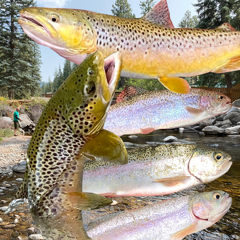 Pagosa Springs Trout Fishing Trip