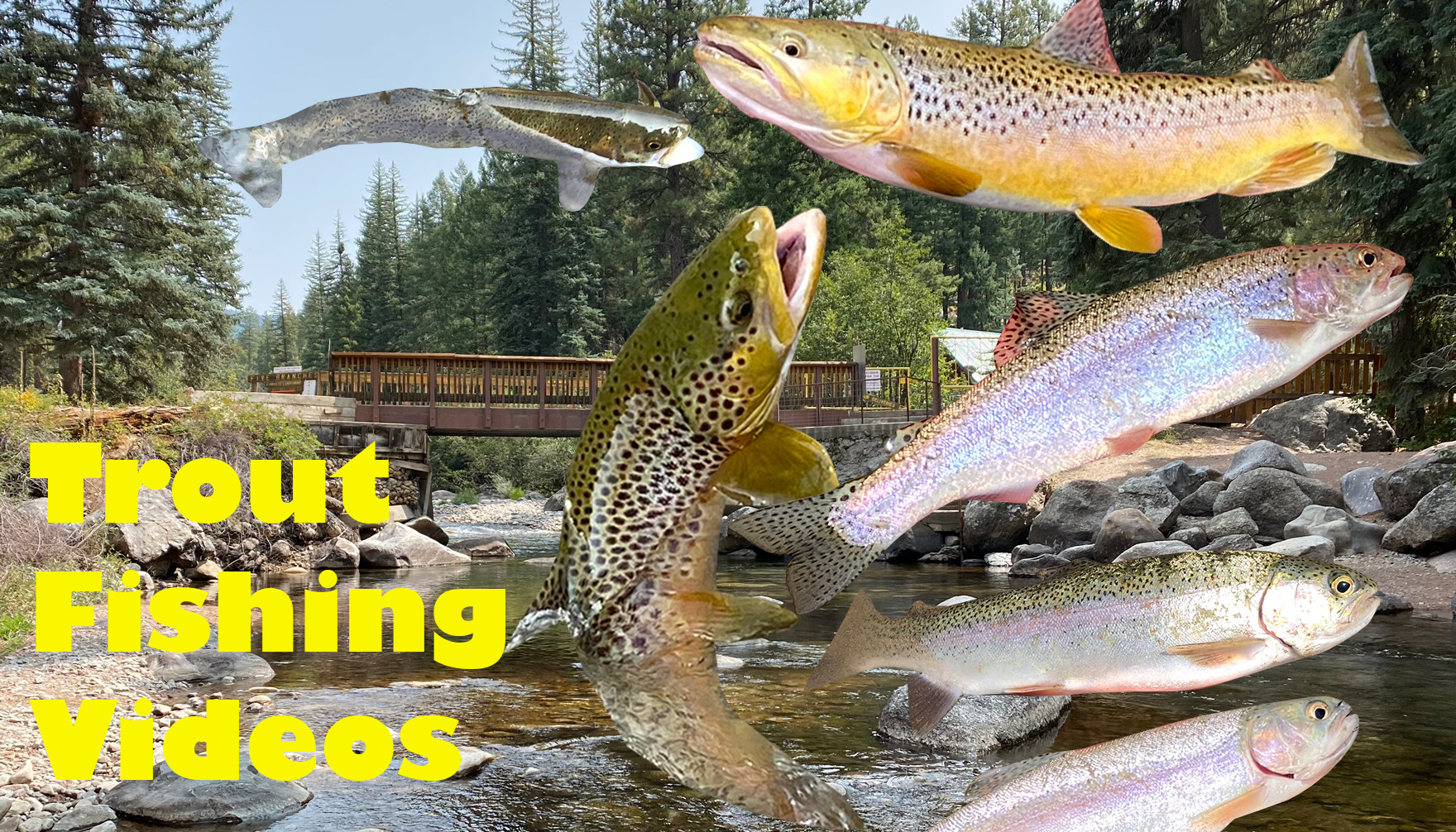 Trout Fishing Videos