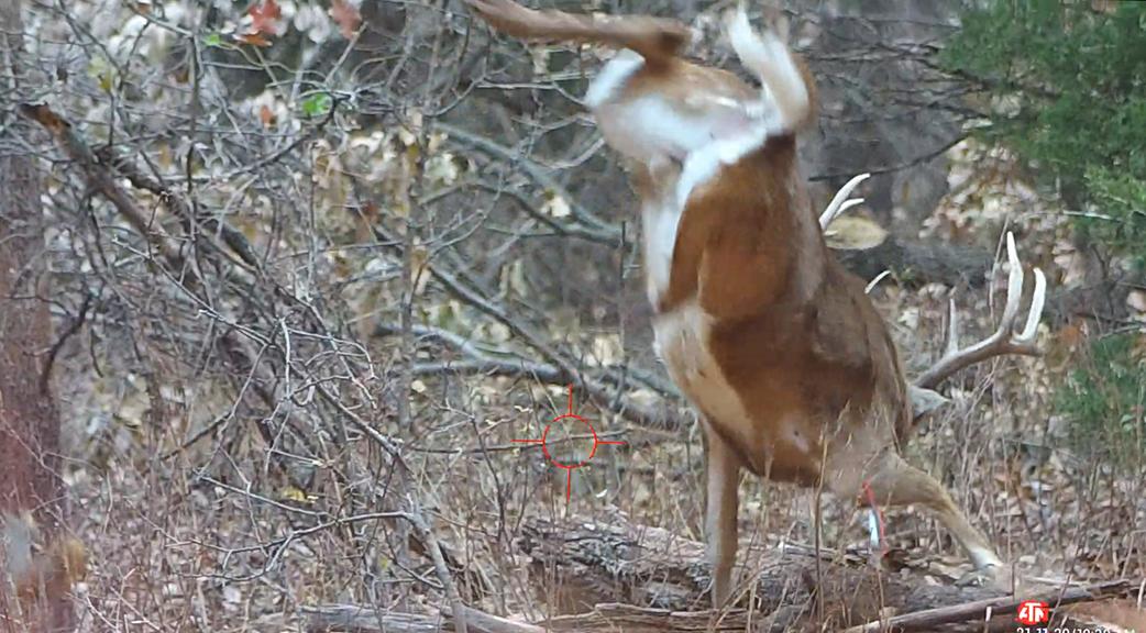 White Tailed Deer   Buck Kill