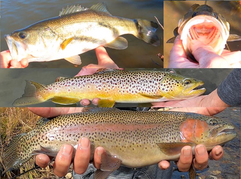 Best Fishing Videos 2020