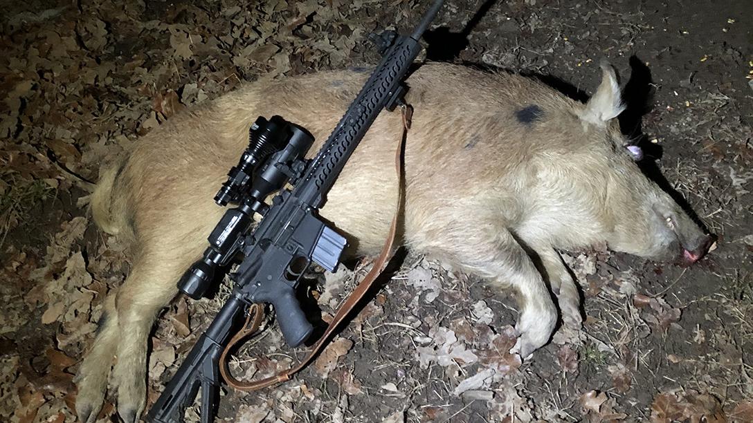 White Boar Hunt