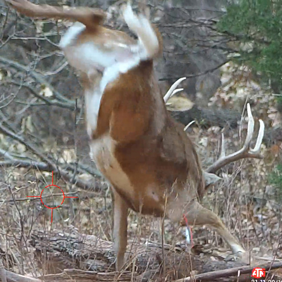8 Point White Tailed Buck